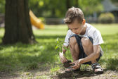 Little boy planting — Stock Photo