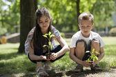 Children planting — Stock Photo