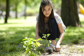 Little girl planting a tree — Stock Photo