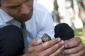 Businessman with a little bird — Stock Photo