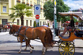 Horse carriage on a street in Karlovy Vary — Stock Photo
