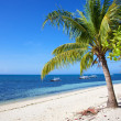Palm tree on white sand tropical beach on Malapascua island, Philippines — Stock Photo