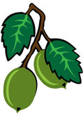 Gooseberry — Stock Vector