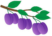 Branch of ripe plums — Stock Vector