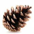 Pine cones — Stock Photo #14780631