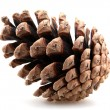 Pine cones — Stock Photo #14780635