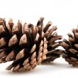 Pine cones — Stock Photo #14780643