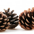 Pine cones — Stock Photo #14780659