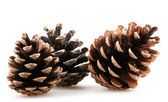 Pine cones — Zdjęcie stockowe