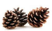 Pine cones — Foto Stock
