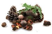 Sada prvků podzimní přírody — Stock fotografie