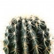 Cactus isolated on white background — Stock Photo #24342977
