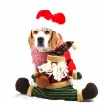Christmas Dog As Santa — Stock Photo