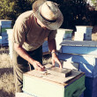 Stock Photo: Beekeeper