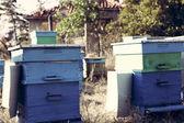 Пчеловод — Стоковое фото