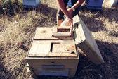 Beekeeper — ストック写真