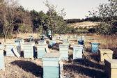 Beekeeper — Stockfoto