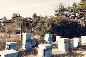 养蜂人 — 图库照片