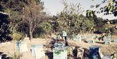 Beekeeper — Photo