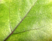 Green Leaf Background — Stock Photo