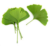 Ginkgo biloba leaves isolated on white background — Stock Photo