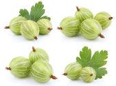 Set of green gooseberry fruit — Stock Photo