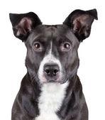 Portrait of black cute dog — Stock Photo