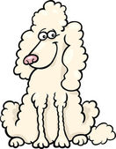 Poodle dog cartoon illustration — Stock Vector