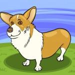 Pembroke welsh corgi dog cartoon illustration — Stock Vector #18476139