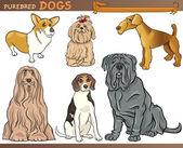Purebred dogs cartoon illustration set — Stock Vector