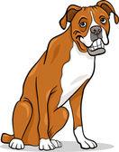 Boxer purebred dog cartoon illustration — Stock Vector