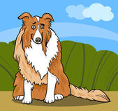 Collie purebred dog cartoon illustration — Stock Vector