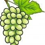 White grapes fruit cartoon illustration — Stock Vector