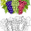 Grapes fruits illustration for coloring book — Stock Vector