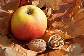 Apfel und Nüsse — Stock Photo