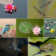 Garden pond collage — Stock Photo