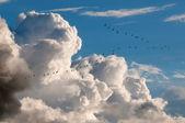 Migratory birds — Stock Photo