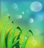 Fresh morning dew on spring — Stock Photo