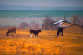 Animals in the Romanian countryside — Stock Photo