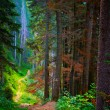 Forest trail — Stock Photo #17133121