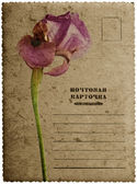 Greeting card with iris flower — Стоковое фото