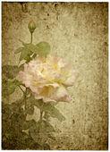 Kartkę z życzeniami z różą. — Zdjęcie stockowe