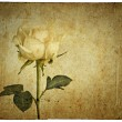 Greeting card with rose — Stock Photo
