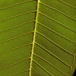 Fragment of green leaf — Stock Photo