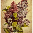 Old card flower.lilac — Stock Photo