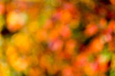 Autumn bokeh. — Stock Photo