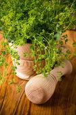 Alternative herbal medicine. — Stock Photo