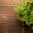 Thyme. — Stock Photo