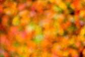 Autumn bokeh. — Stock Photo