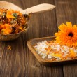 Calendula homeopathic. — Stockfoto